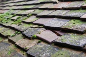 Moss Removal Cheshire